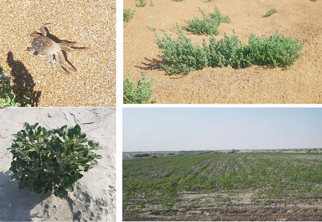 جنبه های مختلف زیست محیطی منطقه